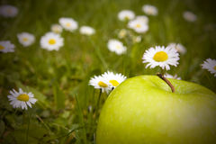 Green apple and daisy flowers Royalty Free Stock Photo