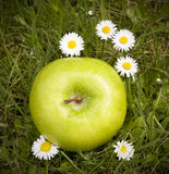 Green apple and daisy flowers Stock Photo