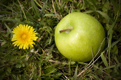 Green apple and dandelion Royalty Free Stock Images