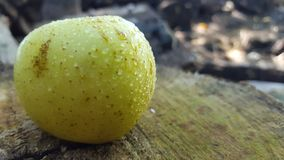 Green apple with dew. Apples grow a lot in the highlands with cold temperatures stock photography