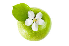 Green apple and flower Stock Image