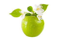Green apple and flower. Isolated on white stock photography