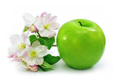 Green apple fruit isolated with pink flowers Royalty Free Stock Images