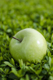 Green apple on grass Royalty Free Stock Photos