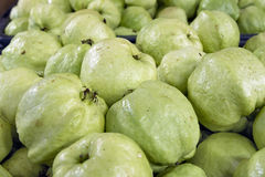 Green Apple Guavas Stock Photography