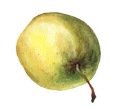 Green apple. Hand drawn watercolor painting Royalty Free Stock Photography
