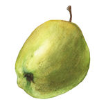 Green apple. Hand drawn watercolor painting Stock Images