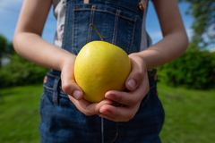 A green apple in a hand reaching out stock photos
