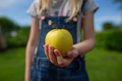 A green apple in a hand reaching out stock photography