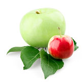 Green apple with leafs and small red apple Stock Images
