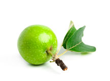 Green apple with leaves and branch Stock Photo