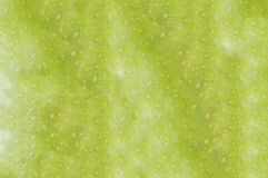 Green apple macro as background. Ripe green apples close up Royalty Free Stock Image