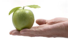 Green apple held in male hand, white background, close up Royalty Free Stock Image