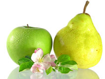 Green apple & pear royalty free stock image