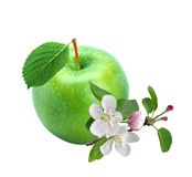 Green apple with spring apple branch and flowers Royalty Free Stock Photos
