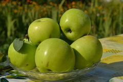 Green apple. The apple tree is a deciduous tree in the rose family best known for its sweet, pomaceous fruit, the apple stock photography