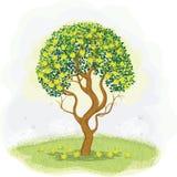 Green apple tree Stock Photos