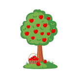 Green Apple tree full of red apples Royalty Free Stock Image