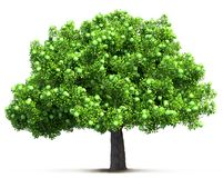 Green apple tree isolated Stock Photography