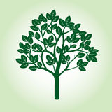 Green Apple Tree and Roots. Vector Illustration Stock Photo