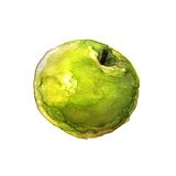 Green apple. Watercolor Royalty Free Stock Images