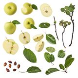 Green apple whole pieces and leaves set isolated on white background. As package design element stock image