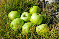 Green apples. In the grass Stock Images