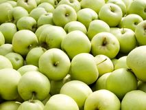 Green apples. Stock Image