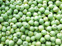 Green apples. Royalty Free Stock Photo