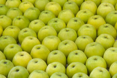 Green apples. Displayed in raw, background image Stock Photos