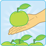 Green apples. The man keeps on palms the green apple Royalty Free Stock Photo