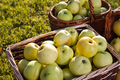 Green Apples Baskets Outdoors  Royalty Free Stock Photo