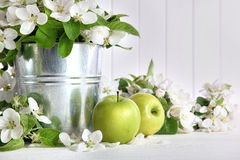 Green apples with blossoms on table Stock Photo
