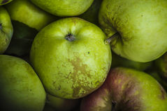Green apples in chest. Chest full of polish treasure - apples, autumn stock photos