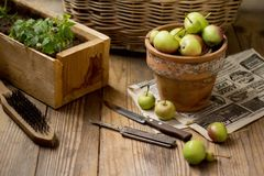Green apples in a clay pot on a wooden background royalty free stock photography