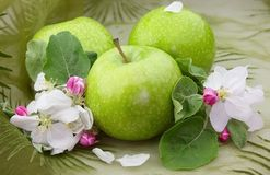 Green apples with flowers Stock Photos