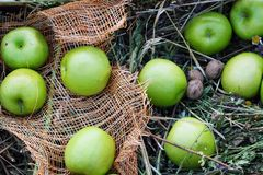 Green apples .the fruit. Green apples . the fruit on the grass Royalty Free Stock Photography