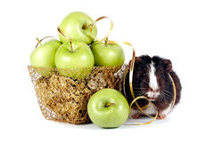 Green apples in a gold basket. Green celebratory apples lie in a gold basket on a white background Stock Images