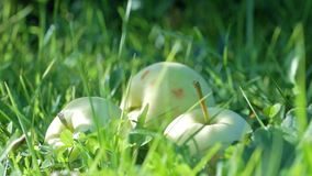 Green apples in grass stock footage