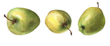 Green apples. Hand drawn watercolor painting Stock Photos