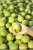 Green apples in the market Stock Photo