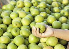 Green apples in the market Stock Photos