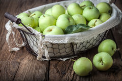 Green apples in a metal basket. Stock Photos