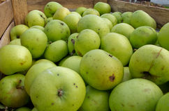 Green apples ready for sale Stock Photo