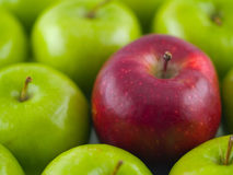 Green Apples with a Single Red Delicious. Background of green apples with a single Red Delicious in the midst Royalty Free Stock Photos