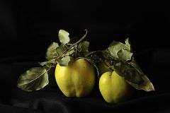 Green apples still life. Still life of green apples with leaves against black background Royalty Free Stock Photos