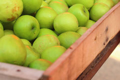 Green apples on a table at the market Stock Images