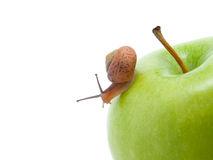 Green apples withe snail Stock Image