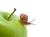 Green apples withe snail Royalty Free Stock Photos
