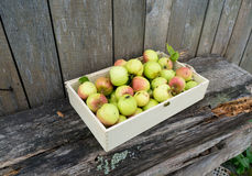 Green apples in wooden box Royalty Free Stock Photos
